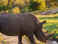 Safari, Game Viewing & Wildlife