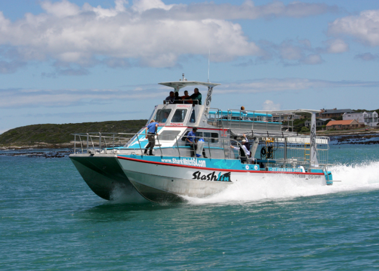 Shark Cage Diving with Chauffeur driven RETURN trip from Cape Town image 2