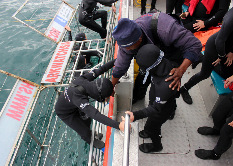 Shark Cage Diving with Chauffeur driven RETURN trip from Cape Town image 5