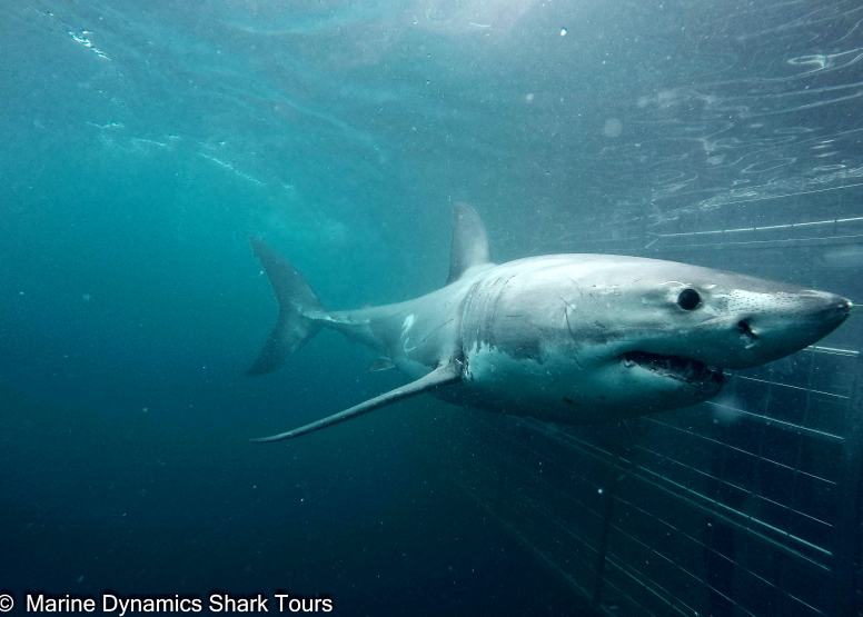 Shark Cage Diving with Chauffeur driven RETURN trip from Cape Town image 1