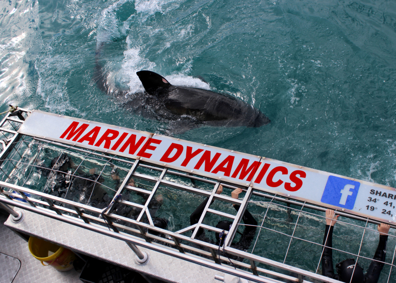 Shark Cage Diving with Chauffeur driven RETURN trip from Cape Town image 6