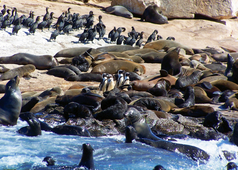Seal Island Cruise image 1