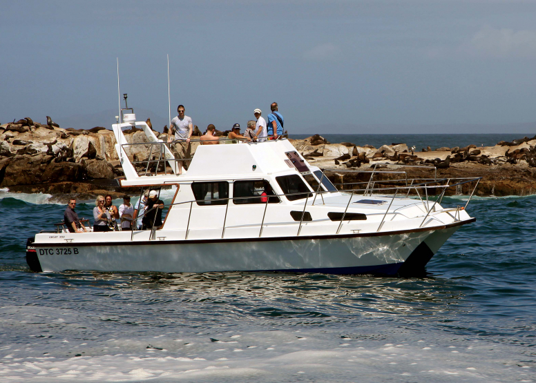 Seal Island Cruise image 9