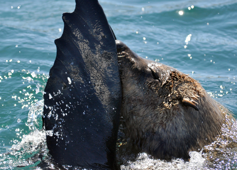 Seal Island Cruise image 10