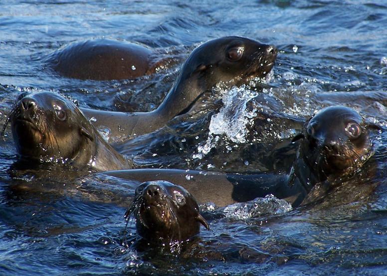 Seal Island Cruise image 11