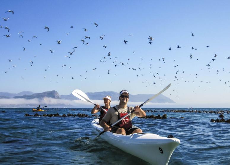 Penguin Kayak Trip image 3