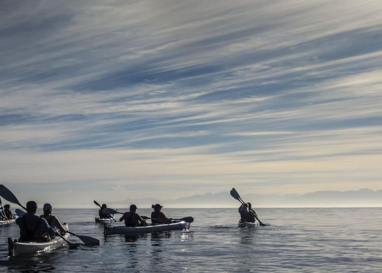 Penguin Kayak Trip image 4