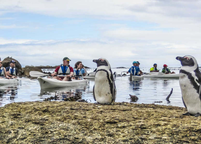 Penguin Kayak Trip image 1