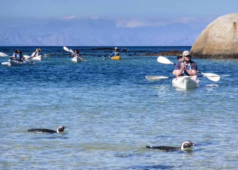 Penguin Kayak Trip image 9
