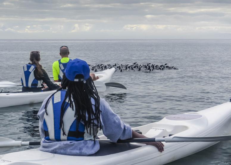 Penguin Kayak Trip image 10