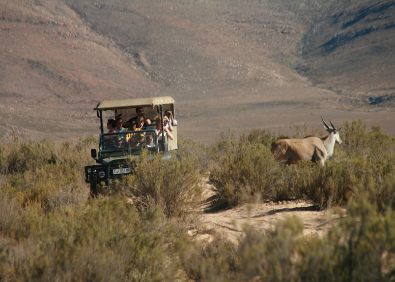 Afternoon Safari (Excluding Transfer) image 4