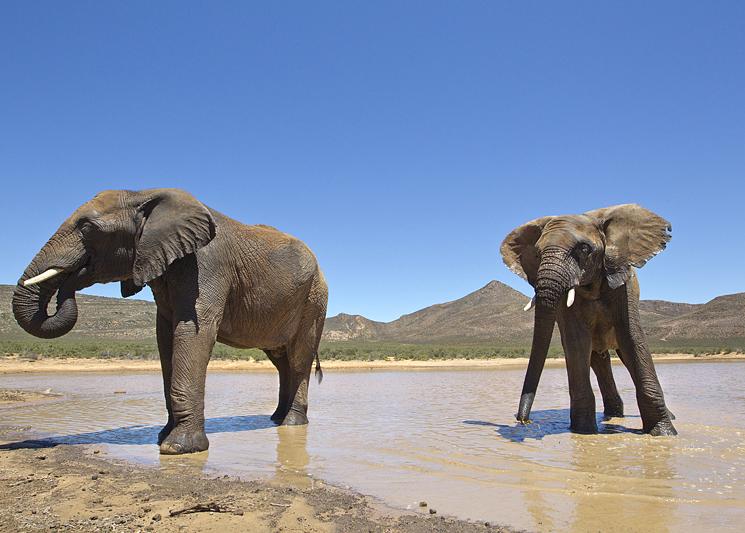 Afternoon Safari (Including Transfer) image 5
