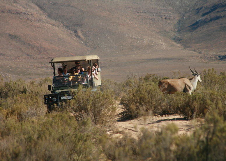 Afternoon Safari (Including Transfer) image 6