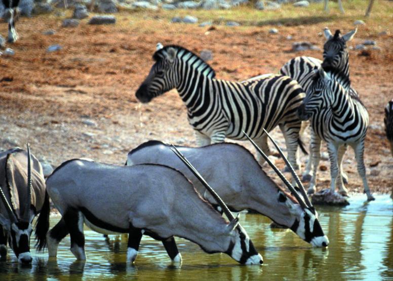 Afternoon Safari (Including Transfer) image 8