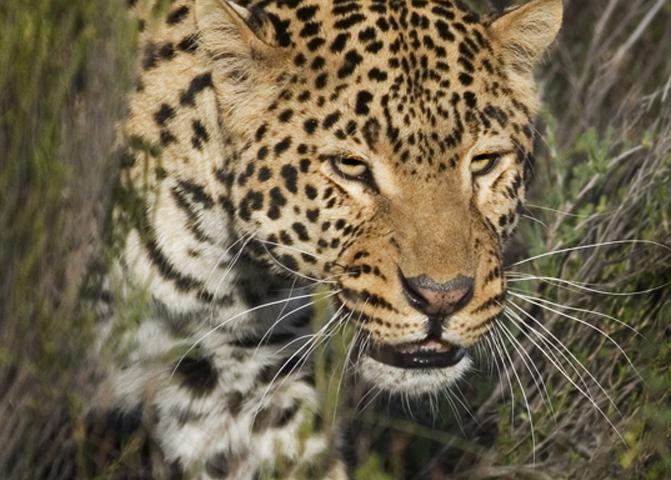 Afternoon Safari (Including Transfer) image 11