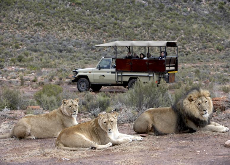 Early Morning Safari image 6