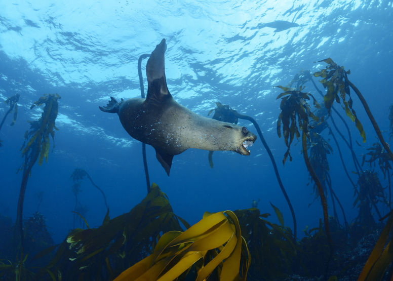 Seal and Kelp Forest Package image 4