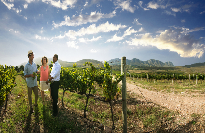 Guided Cape Winelands Private One Day Tour