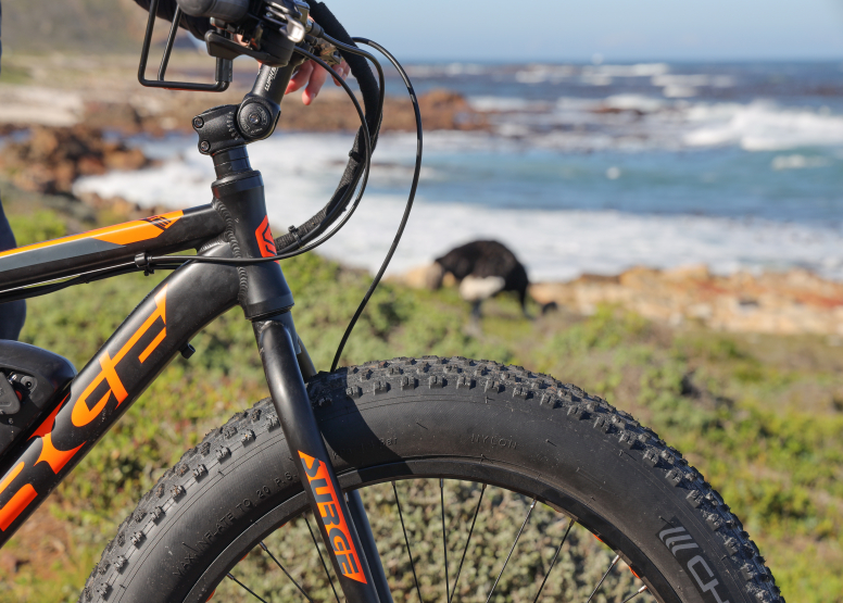 Electric Bike Cape Peninsula Tour image 8