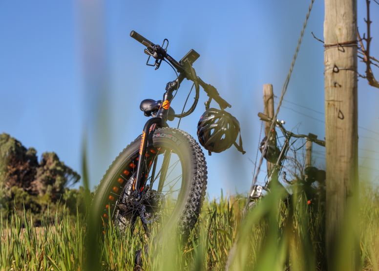 Electric Bike Cape Peninsula Tour image 11