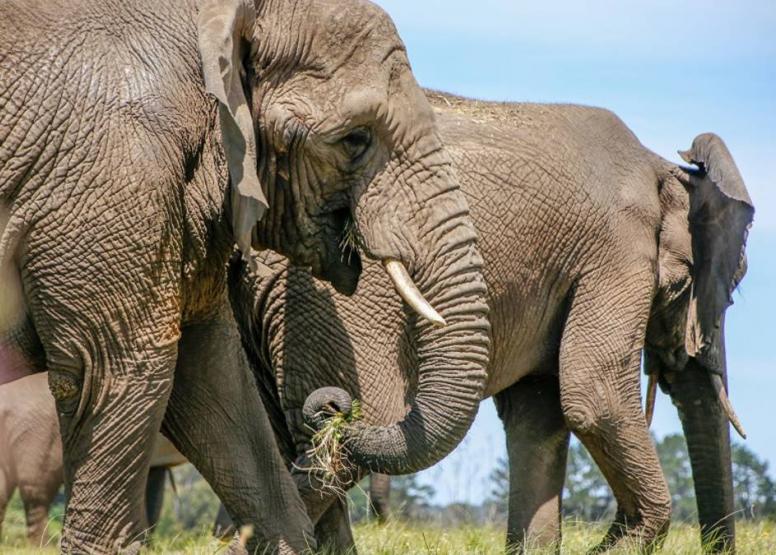 Morning Elephant Walk image 4