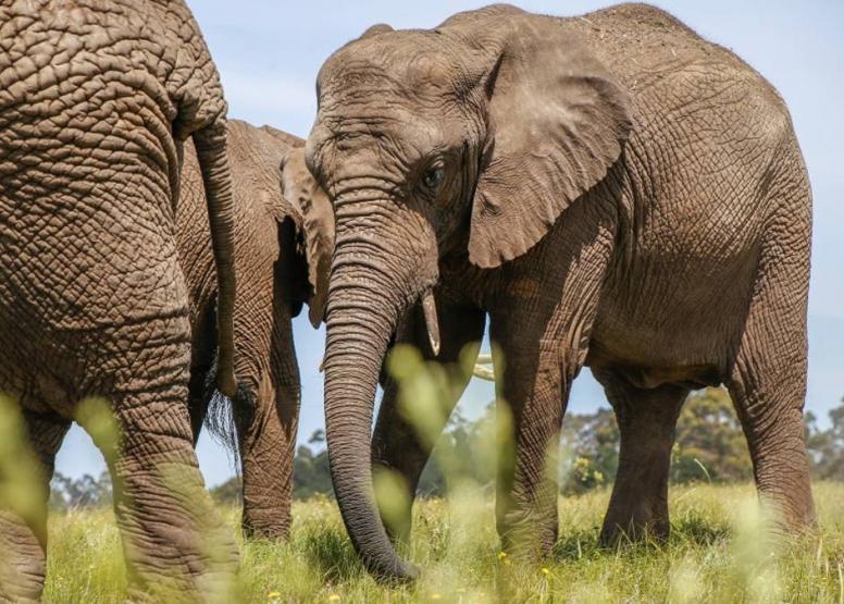 Morning Elephant Walk image 7