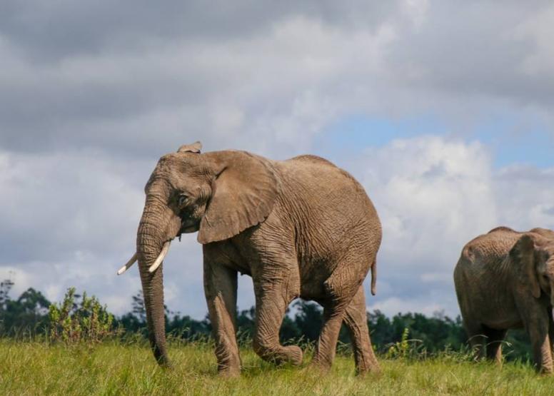 Morning Elephant Walk image 5