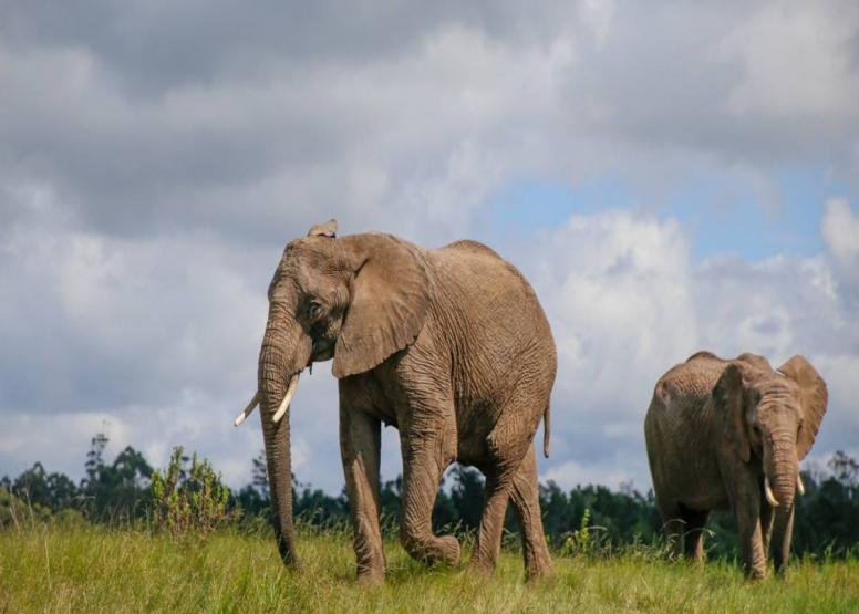 Afternoon Elephant Walk image 3