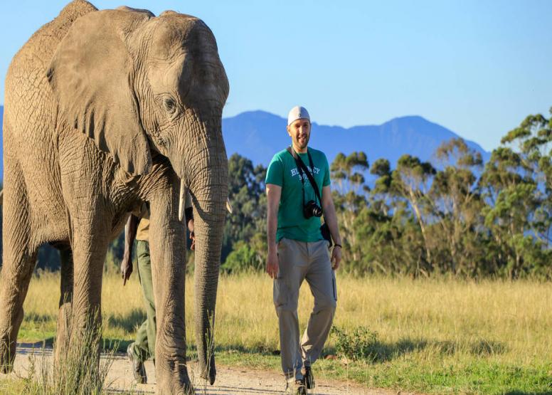 Afternoon Elephant Walk image 4