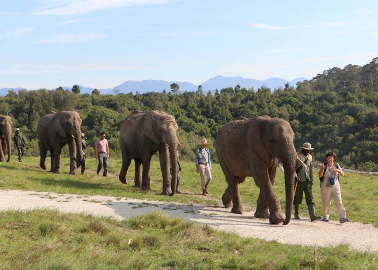 Morning Elephant Walk image 2