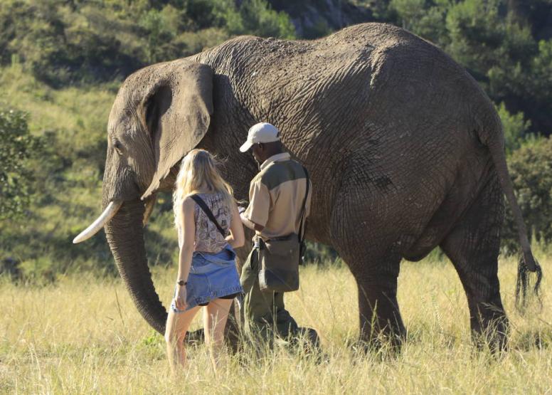 Morning Elephant Walk image 1