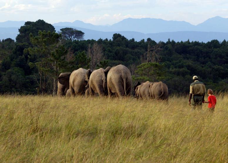Morning Elephant Walk image 9