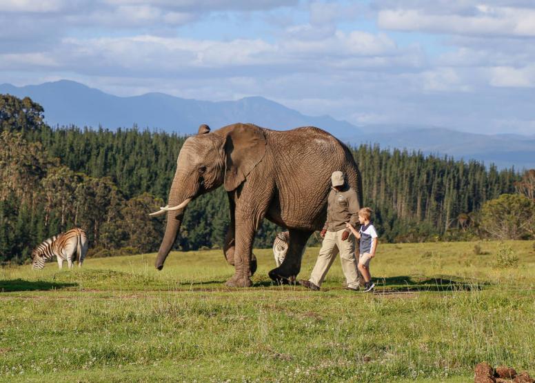 Morning Elephant Walk image 10