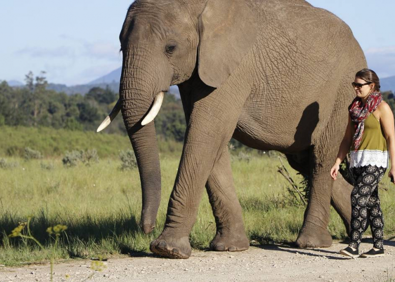 Morning Elephant Walk image 11