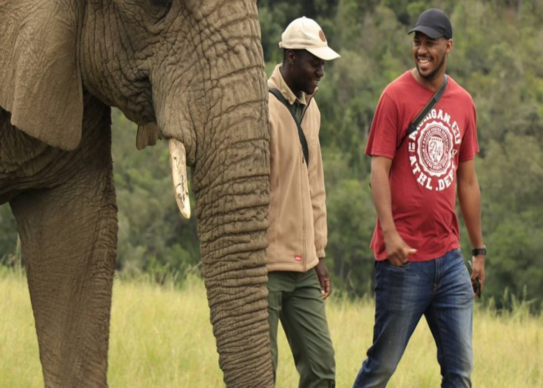 Afternoon Elephant Walk image 5