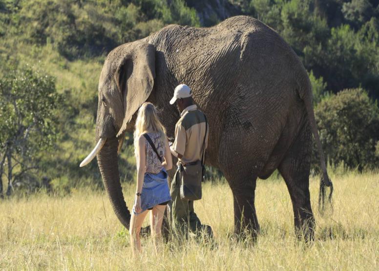 Afternoon Elephant Walk image 6