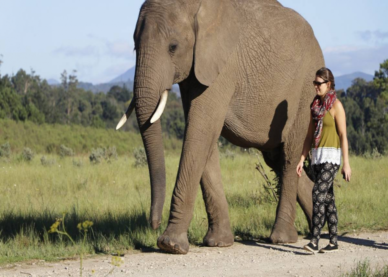 Afternoon Elephant Walk image 7